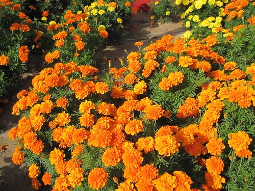 Beautiful Flowers at Jumeira Beach Park