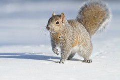 Squirrel DSC_8022