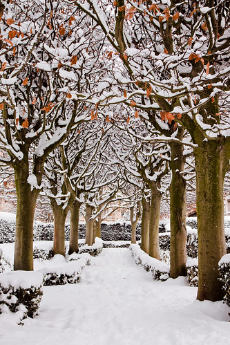 Snowy avenue