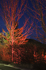 Upplýst tre, rautt (helga 105) Tags: red iceland decoration tre ísland tré rautt skreyting helga105