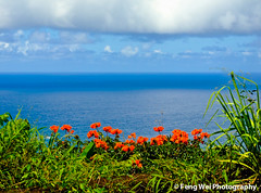 Scenic view along Road to Hana, Maui Hawaii (Feng Wei Photography) Tags: ocean travel blue red sea summer wallpaper vacation color green nature beauty landscape hawaii scenery colorful scenic maui roadtohana