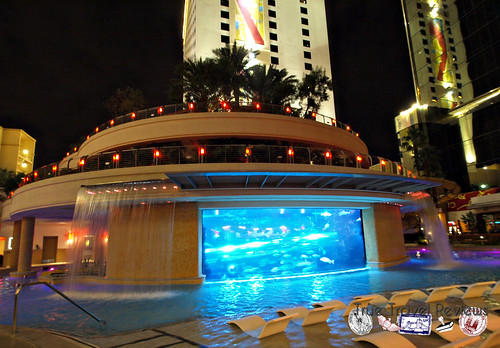 The Tank – Golden Nugget Hotel & Casino – Downtown Las Vegas, Nevada