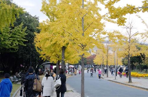 秋の長居公園@セレッソ大阪 VS 横浜マリノス