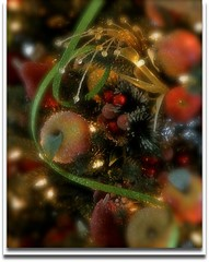 A Season of New Life (flowerwine) Tags: christmas decorations holiday tree apple fruit season lights frost berries garland sparkle ornaments pear ribbon 18200mm canon7d qualitygold