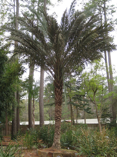 DatePalm1
