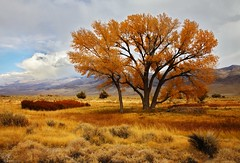 Pleasant Day in Owens Valley (DM Weber) Tags: california autumn storm fall canon landscape cottonwood owensvalley eos5dmarkii psa148 dmweber