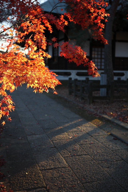 夕暮れの秋色