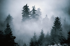 hidden (Dennis_F) Tags: trees mist misty fog zeiss forest germany dark nebel sony hidden fullframe dslr bume schwarzwald blackforest baum mystic 135mm versteckt mummelsee 13518 a850 sonyalpha sonydslr vollformat cz135 zeiss135 schwarzwaldhochstrase dslra850 sonya850 sonyalpha850 alpha850 sony135 sonycz135
