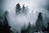 hidden (Dennis_F) Tags: trees mist misty fog zeiss forest germany dark nebel sony hidden fullframe dslr bäume schwarzwald blackforest baum mystic 135mm versteckt mummelsee 13518 a850 sonyalpha sonydslr vollformat cz135 zeiss135 schwarzwaldhochstrase dslra850 sonya850 sonyalpha850 alpha850 sony135 sonycz135