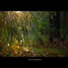 in the dream forest (stella-mia) Tags: norway forest explore 2470mm explored dreamforest canon5dmkii