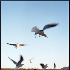 (masaaki miyara) Tags: 6x6 film flying seagull hasselblad medium format ferryboat planar   kodakportra160nc