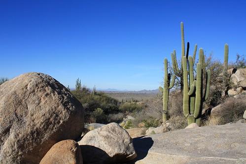 Cargodera Flat-Rock Oasis