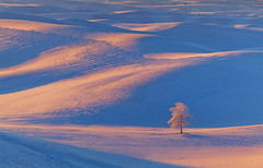 Palouse Winter Moments (kevin mcneal) Tags: winter snow sunrise washington palouse easternwashington naturepoetry thepowerofnow