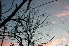 (YesterdayBeforeWasTomorrow) Tags: blue trees sky black contraluz cielo rama rma enfoque rbol