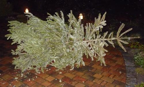 KNUT: Weihnachtsbaum