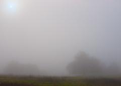 trees and fog (booksin) Tags: california morning trees fog paloalto oaks booksin arastraderoopenspacepreserve copyrightbybooksinallrightsreserved