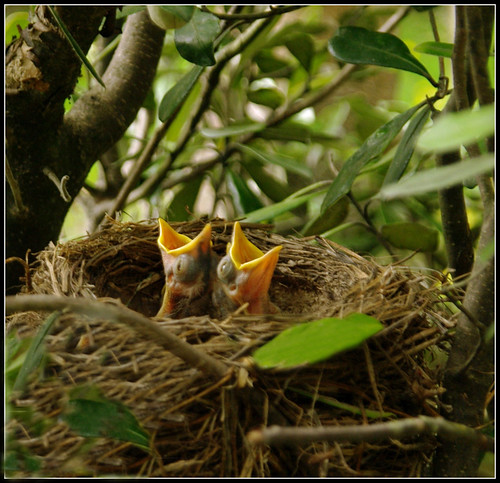 Social media as hungry for content as these baby birds