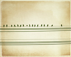 You've Got a Friend. (CarolynsHope) Tags: bird texture lines birds silhouette composition beige friend friendship tan cream silhouettes minimal wires simplicity simple birdsonwire birdonawire birdsonawire lesbrume carolynshope