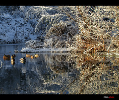 The beauty of light / La belleza de la luz (OMA photo) Tags: light espaa snow luz beauty ro reflections river spain nieve belleza reflejos palencia carrrin