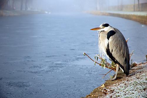 Canal Heron I