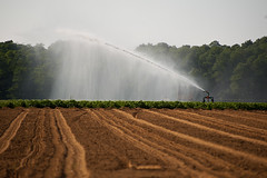 Watering crops (DaveMosher) Tags: potatoes vodka distillary