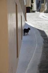 DSC_0787 (ermyale) Tags: gatti grecia cicladi andros