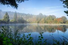Framed (Sebo23) Tags: autumn trees hersbstimmung herbst spiegelungen reflections reflektionen nebel morgenstimmung framed eingerahmt canon6d canon24704l polfilter gttingersee