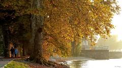 """Passeggiata autunnale sul Lago di Como (""""AMAR"""") Tags: tramonto tramontoautunnale lago lagodicomo corennoplinio dervio provinciadilecco lombardia autunno beautifullandscapes coloridellautunno acero passeggiata"""