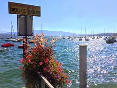 Creux de Genthod (oobwoodman) Tags: switzerland suisse schweiz lakegeneva lake lman lac leman genfersee see boat bateau boot segelboote sailboats cruxdegenthod geneva genve genf genthod sign schild flowers blumen fleurs