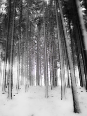 first snow (kubais) Tags: winter snow forest gupr