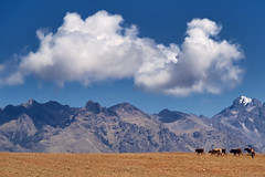 A Trip Through the Andes (pantha29) Tags: trip blue sky mountains peru field cattle hill olympus andes polarizer herd zuiko e510 1260mm