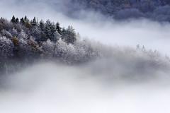 Lanbroa eta antzigarra (jonlp) Tags: mist nature forest landscape natura euskalherria basquecountry basoa lanbroa otzaurte paisajea