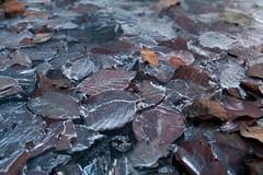 Frozen Leaves (jamesheard) Tags: uk winter sunset snow cold southwales wales canon 350d december valeofglamorgan 2010 sigma1850f28 eosrebelxt