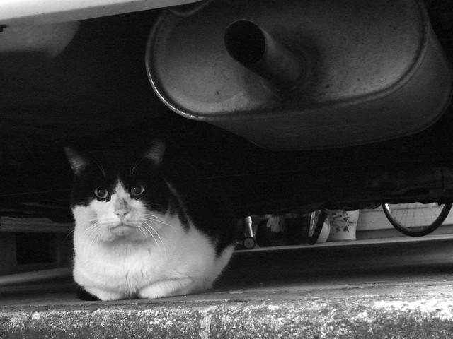 Today's Cat@2010-12-02