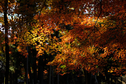 紅葉 autumn colors