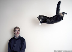 Super Cat (Photo Extremist) Tags: pet white abstract man animal cat fly flying jump jumping kitten background air attack kitty surreal floating mainecoon surprise stare toss midair copyspace dali staring pounce lead throw throwing maincoon attacking caucasian ninjacat pouncing