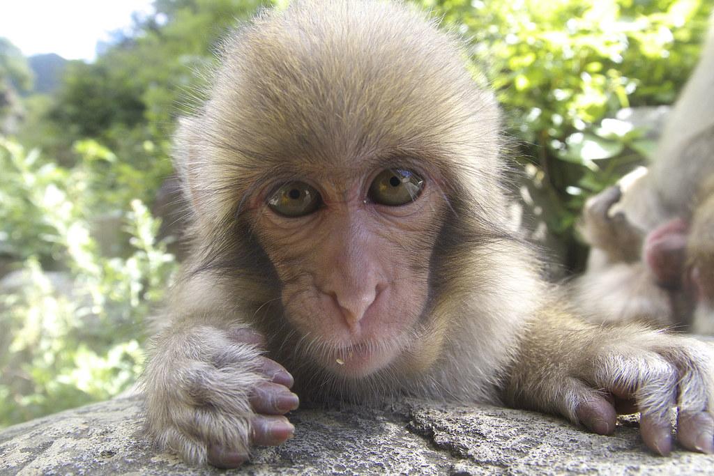 Primatologist Reveals Sad Truth About Viral Monkey Haircut Meme