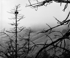 Mt Diablo (Amanda Tomlin) Tags: 4x5 linhof mtdiablo acros