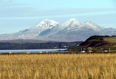Snow on Jura - none here on Islay (glenfinlas) Tags: snow mountains field scotland scenery sheep hills islay jura seals loch frommywindow bowmore hebrides lochindaal argyllandbute