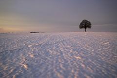 Gardien de l'aube (photosenvrac) Tags: landscape soleil photo centre neige paysage arbre beauce beaugency rgion levdesoleil treesubject