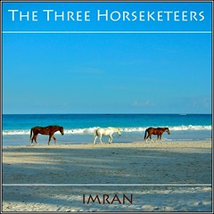 The Three Horseketeers, Eleuthera, Bahamas - IMRAN  1100+ Views! (ImranAnwar) Tags: ocean travel blue sea sky horses seascape beach nature water animals square outdoors seaside sand nikon marine scenery waves turquoise framed azure lifestyle bluesky bahamas imran eleuthera 2007 harbourisland oceanfront imrananwar