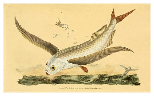 006-The natural history of British fishes 1802-Edward Donovan