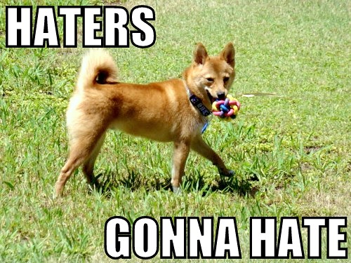 taro the shiba, haters gonna hate