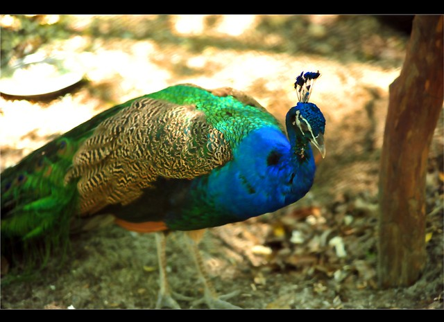Zoo Taiping 52