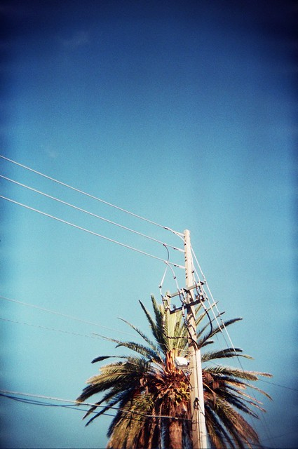 palm and live wires