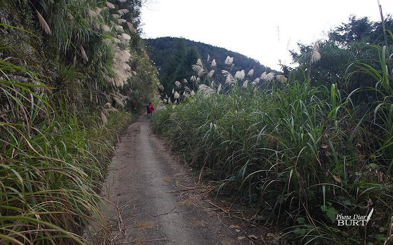 漫長又陡的林道
