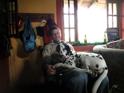 Dalmatian on Dusty at Secret Garden Cotopaxi