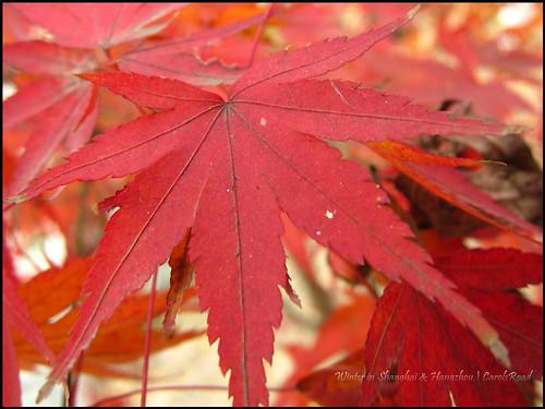 2010-12-08 Shanghai 051P13