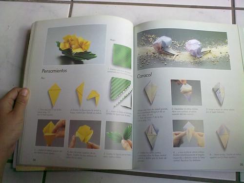Flores y caracoles
