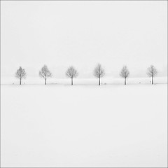 east (nani targetti) Tags: trees winter white fog germany alley solitude minimal pure brandenburg bless